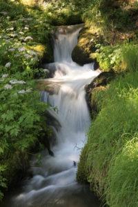 Ein Wasserfall im Wald.